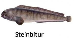 steinbitur